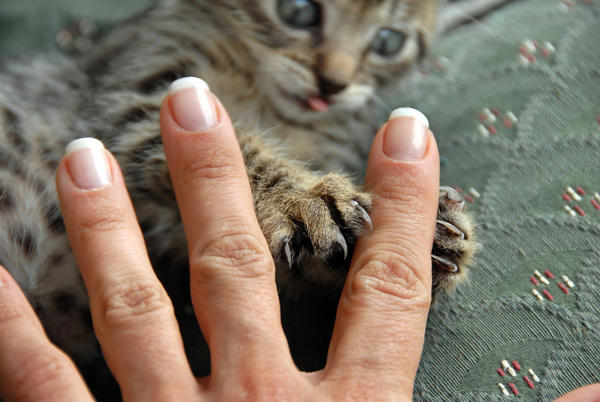 Could you tell me what is the main symptom of cat scratch disease?