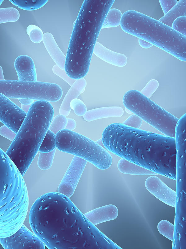 When do I need to stop probiotics before taking the helicobacter pylori breath test?