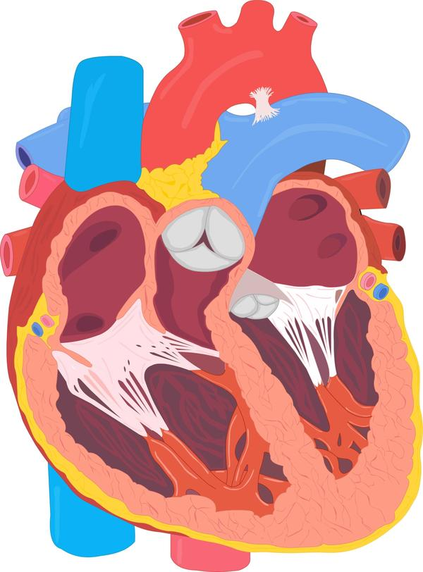 Enlarged heart caused by copd, what to do?