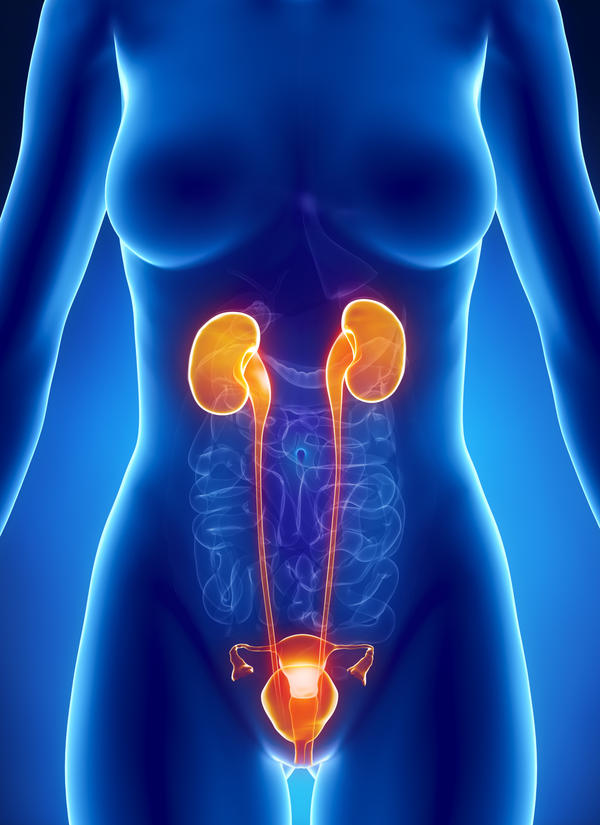 What anotomy of female urinary system?