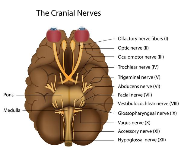 Numb on neck &ear&one side of face, dizziness nausea, motion sicknes. Had brain MRI all clear. Read abt Vertebral Artery Dissection. Now really anxious.