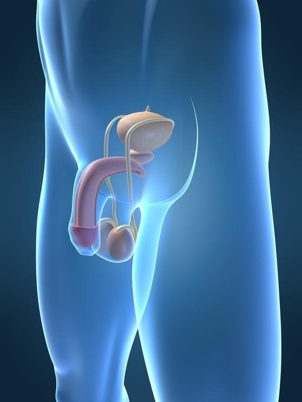 Is it possible for testicles to regain normal size after varicocelectomy?