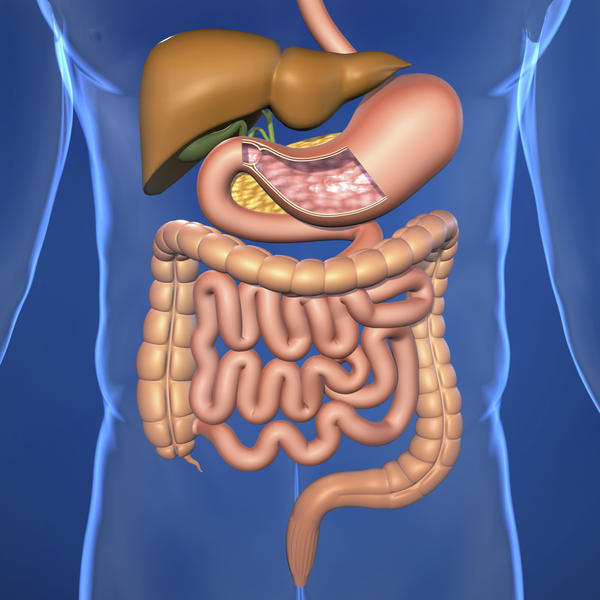 How can the digestive system interact with the cardiovascular system?