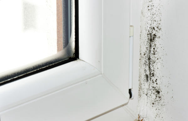 What protective clothing is required when removing black mold?