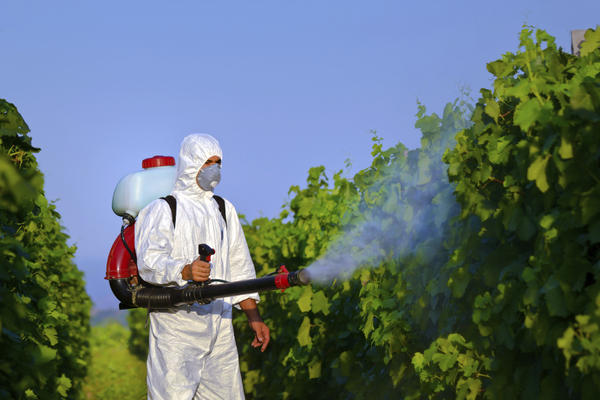 Will pesticides on neighboring farm come across to organic farm?