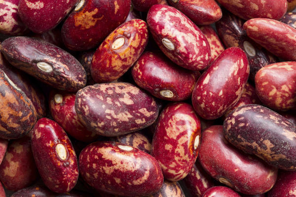 Cause of allergic reaction to pinto beans?