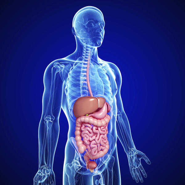 How does the digestive system protect us from pathogens?