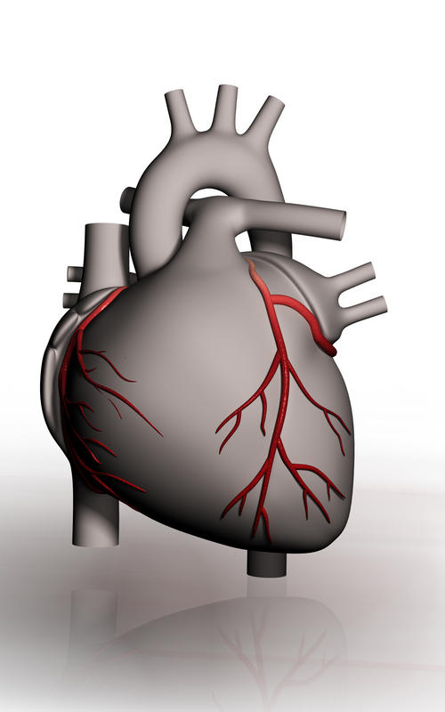 What is the function of coronary arteries?