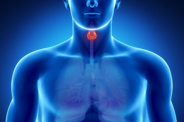 What hormones are secreted by the thyroid gland?