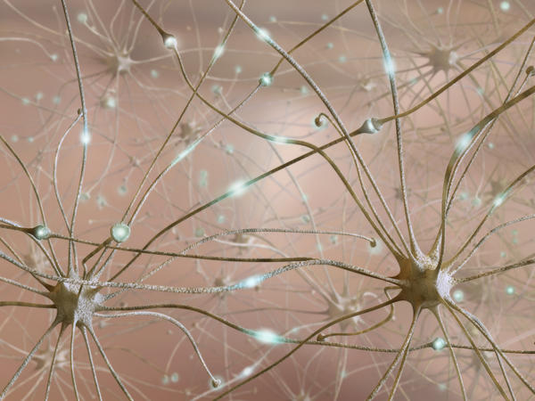 Are there holistic medicines that cure epilepsy?