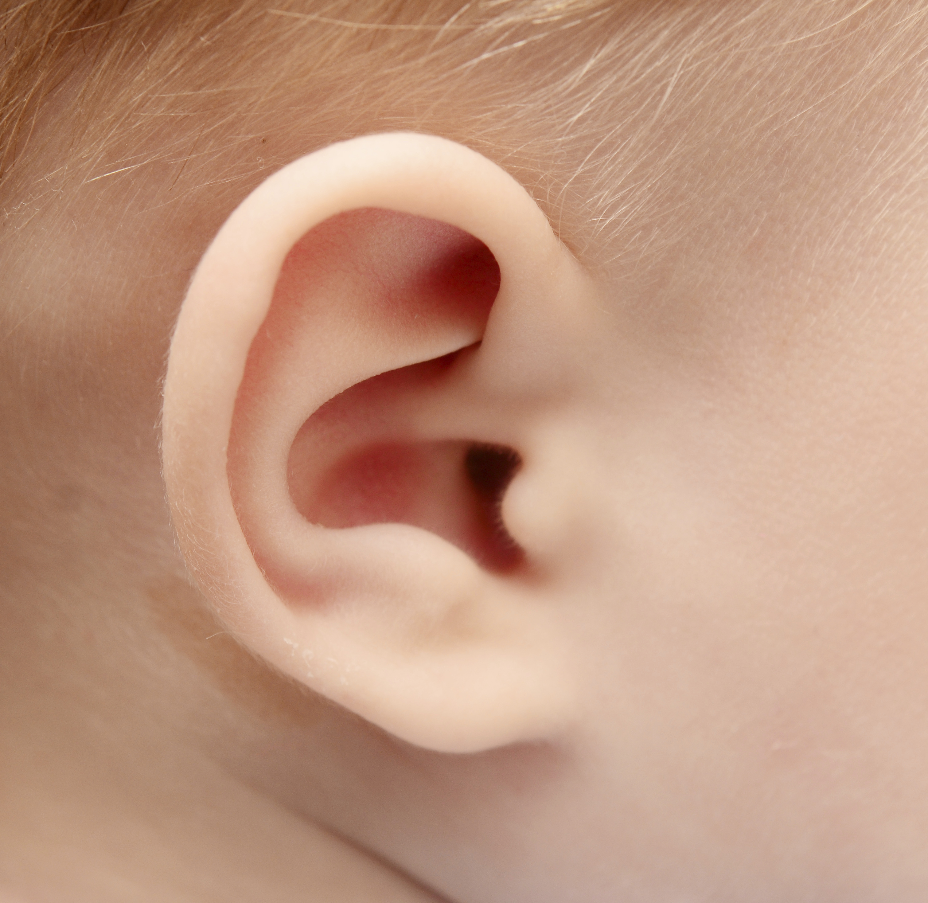 Фото ушей для детей