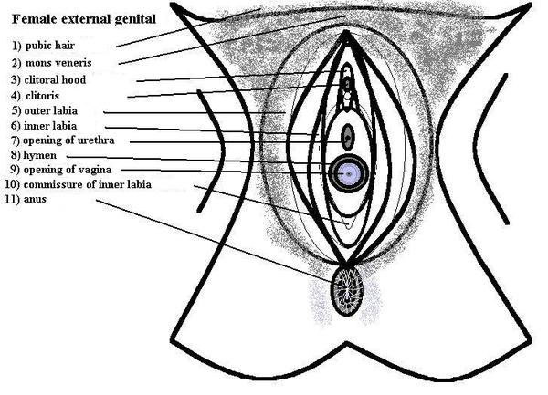 What's the cause of occasional painful urination with the pain occurring on one side of the vaginal wall?