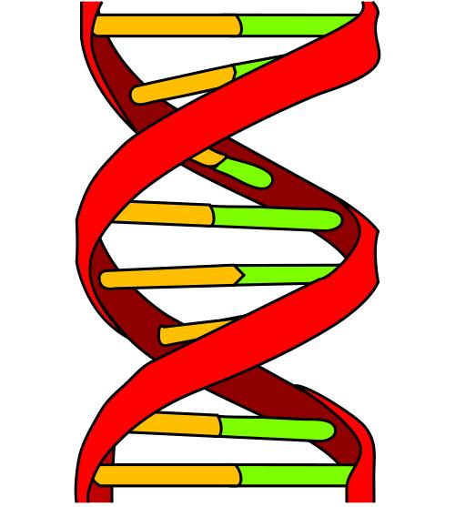 How long does a DNA patenity test take?