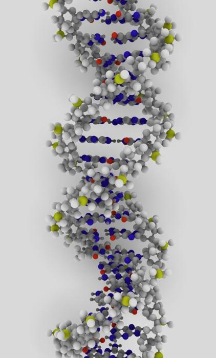 How do online DNA testing services work?  Are they reliable at all?