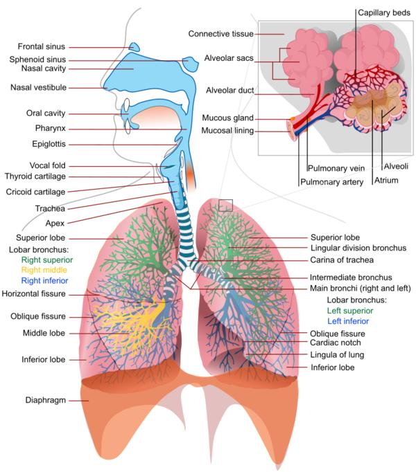 What're the common causes of breathing problems?