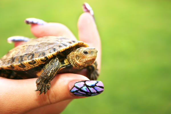 Are turtles safe pets for kids?