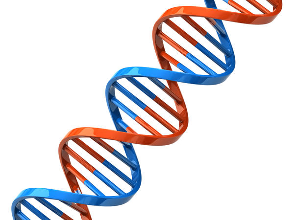 How do gene defects cause different forms of muscular dystrophy?