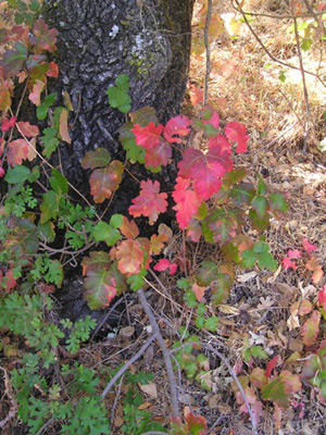 What is the best treatment for poison oak. I was just exposed what should I do?
