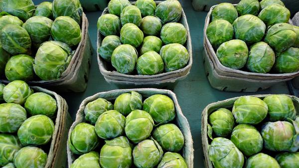 Is the risk of bacterial infection there only when consuming raw sprouts? Will cooking sprouts kill bacterial infection if any in the sprouts?