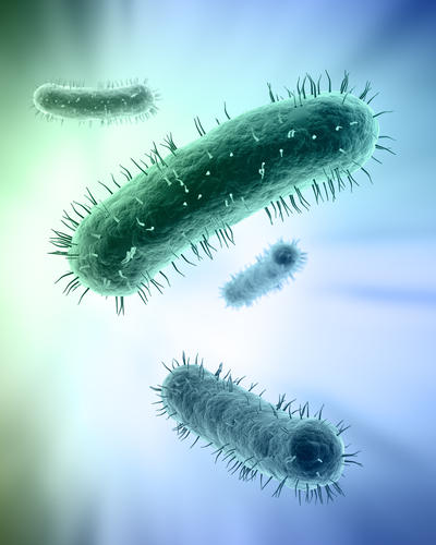 Is there a natural cure or remedy for chronic bacterial infections?