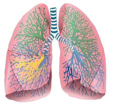 If I had tuberculosis. Would my doc be able to tell just by listening to lungs?