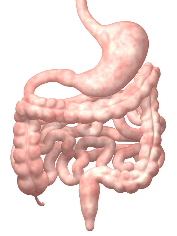How far into the small intestine can a colonoscopy and endoscopy see?