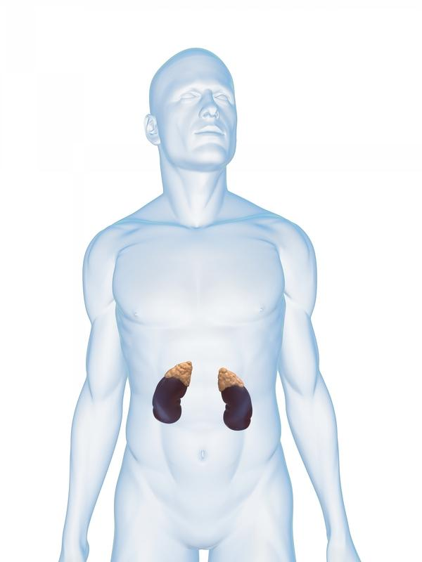 Kidney failure-what does that mean, what to do?