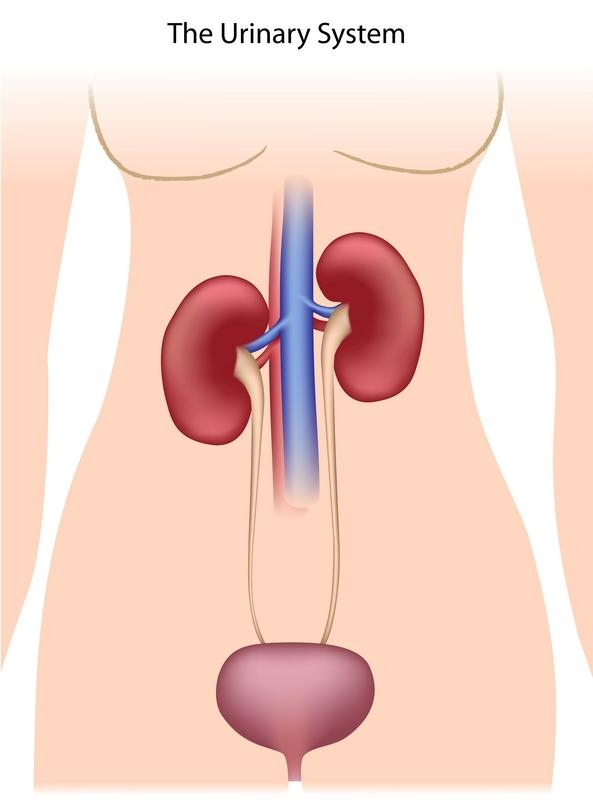 Does interstitial cystitis of the bladder cause a lot of uti's  ?