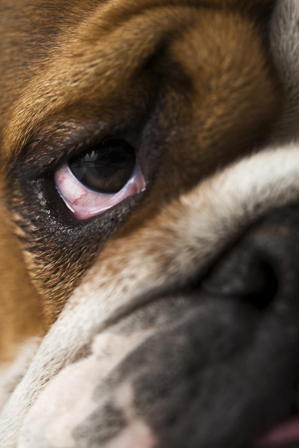 What causes someone to die form an allergic reaction to dogs?