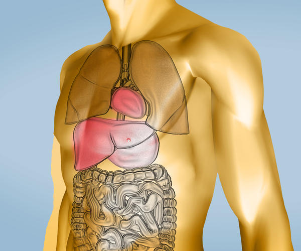 What diseases would lead to needing an organ donation?
