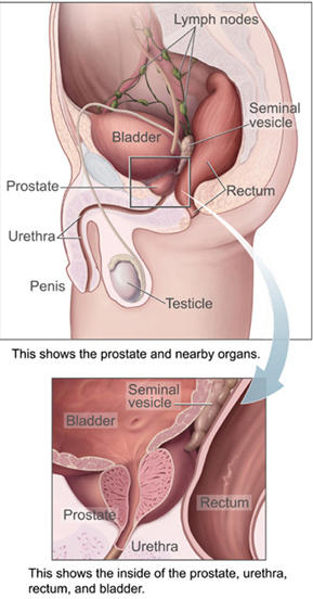 Could a 16 year old male get an enlarged prostate?
