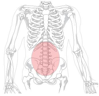 What is Spondylolysis of L5-S1 and what are causes? Also, would muscle injury (I.E sprain/strain) to the Lumbar region cause Sciatica symptoms?