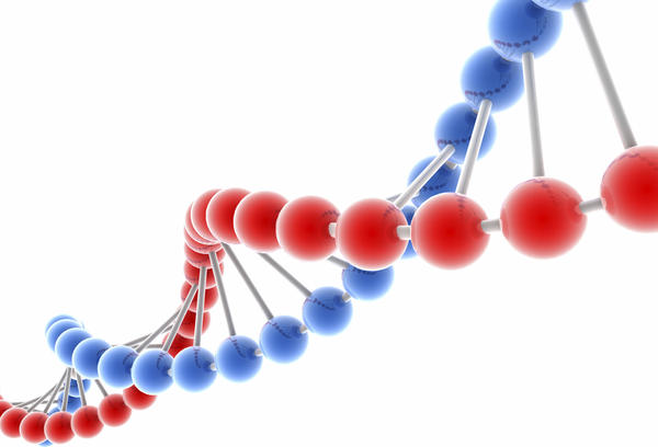 What's the function of dna, rna?