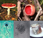 various fungus Fungal infection Fungus Infection