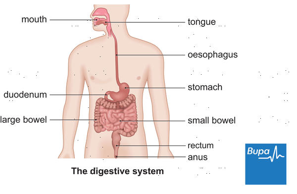 What can you tell me about indigestion?