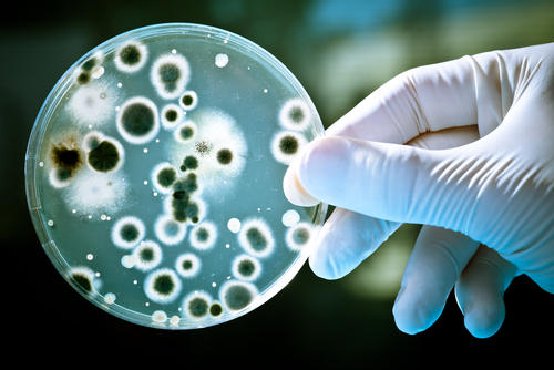 How common are secondary bacterial infections or sepsis with a mono infection?