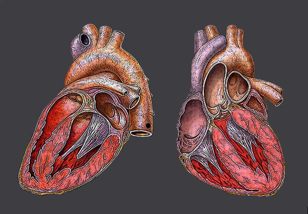 What is the? Difference between restrictive cardiomyopathy and constrictive pericarditis?