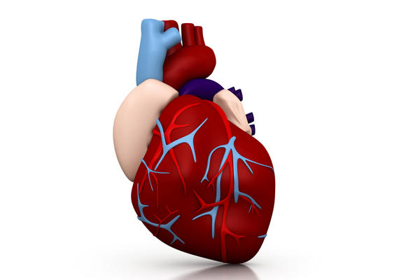 What does an enlarged left ventricle of the heart do to a child?