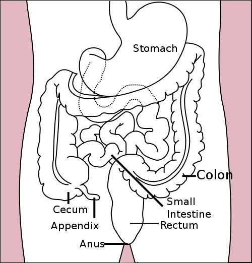No bowel movement prior to this, but gassy.  Had a small amout of brown discharge from anal area (not vaginal discharge) causes?