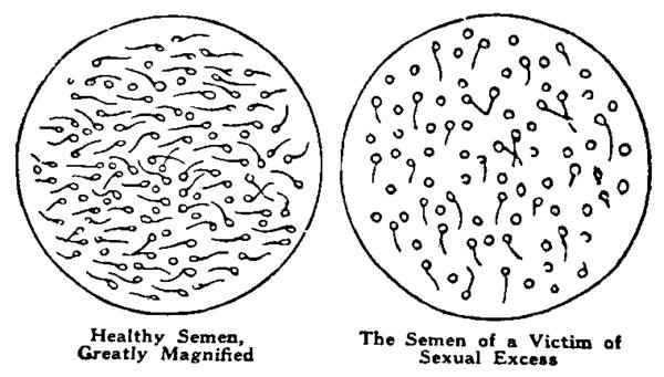 How much time does it take for the food to become semen/sperm?