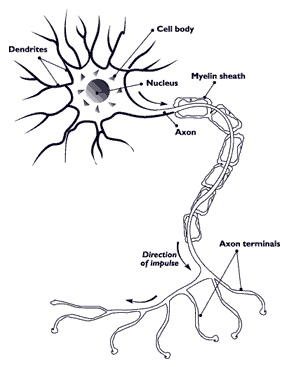 Can a diagnostic cerebral angiography show als?
