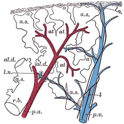 Could you explain what is an arteriovenous malformation (avm)?