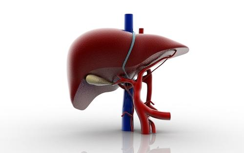How does cirrhosis of the liver develop?