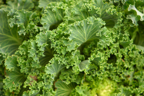What foods are high in vitamin k?