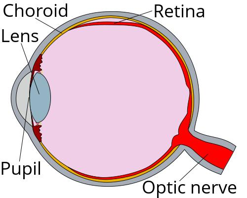 How does high blood glucose weaken blood vessels, leading to diabetic retinopathy, nephropathy?