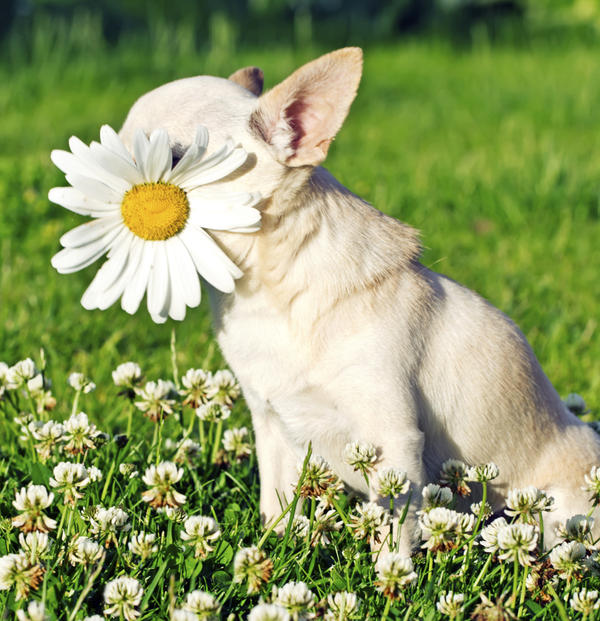 Is it possible to cure pet dander allergies?