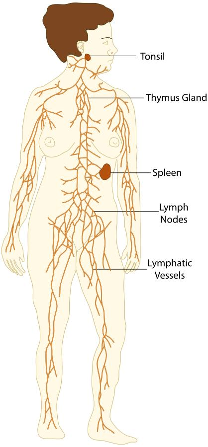 I have pain over my entire body that seems to be where all of my lymph nodes are. I have a fibro diagnosis that I feel is incorrect. Possible causes?