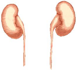 My father diagnose with bilateral mild renal parenchymal disease changes wat does it mean?