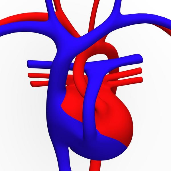 Where is an aortic aneurysm?