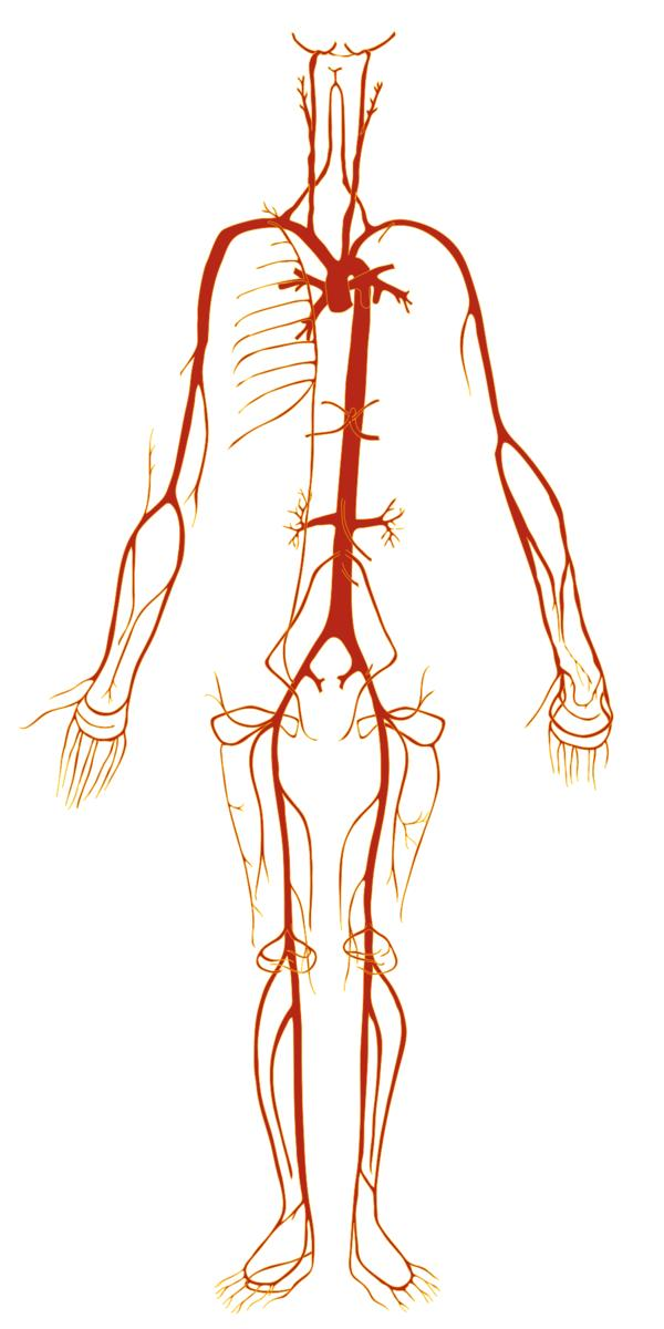 What are the tests for arteriosclerosis of extremities?